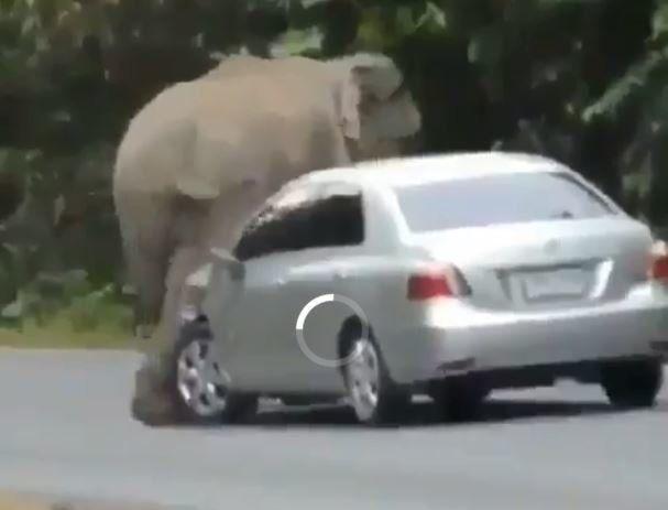 Ελέφαντας διαλύει αυτοκίνητο σε 45 δευτερόλεπτα