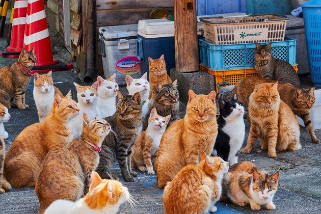 '고양이섬'으로 유명한 일본