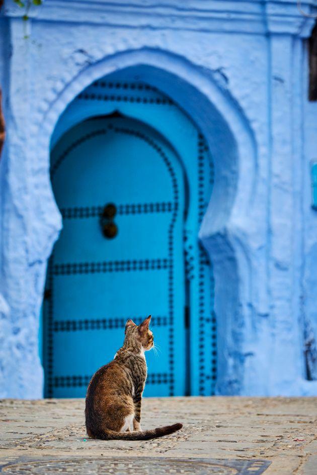2명의 사진작가가 찍은 전 세계 길고양이들의 위대한