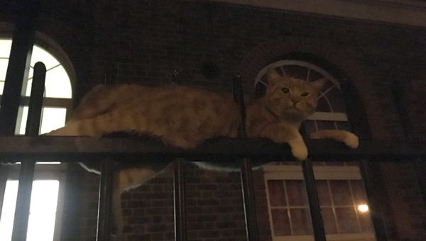 Skittles the ginger cat fell and was impaled on metal railings in London in March. London Fire Brigade crews cut the&nbs