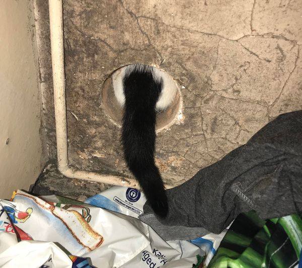 This curious cat became wedged inside an air vent at her home in Kidderminster, Worcestershire, in December. RSPCA animal col