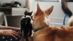 Dog Pets Cat, Cat Hugs Back – Plus 4 Other Cute Animals To End The