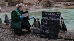 London Zoo Begins Its Annual