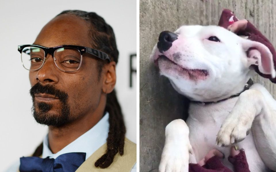 snoop-dog-says-abandoned-dog-named-snoop-can-come-live-with-him
