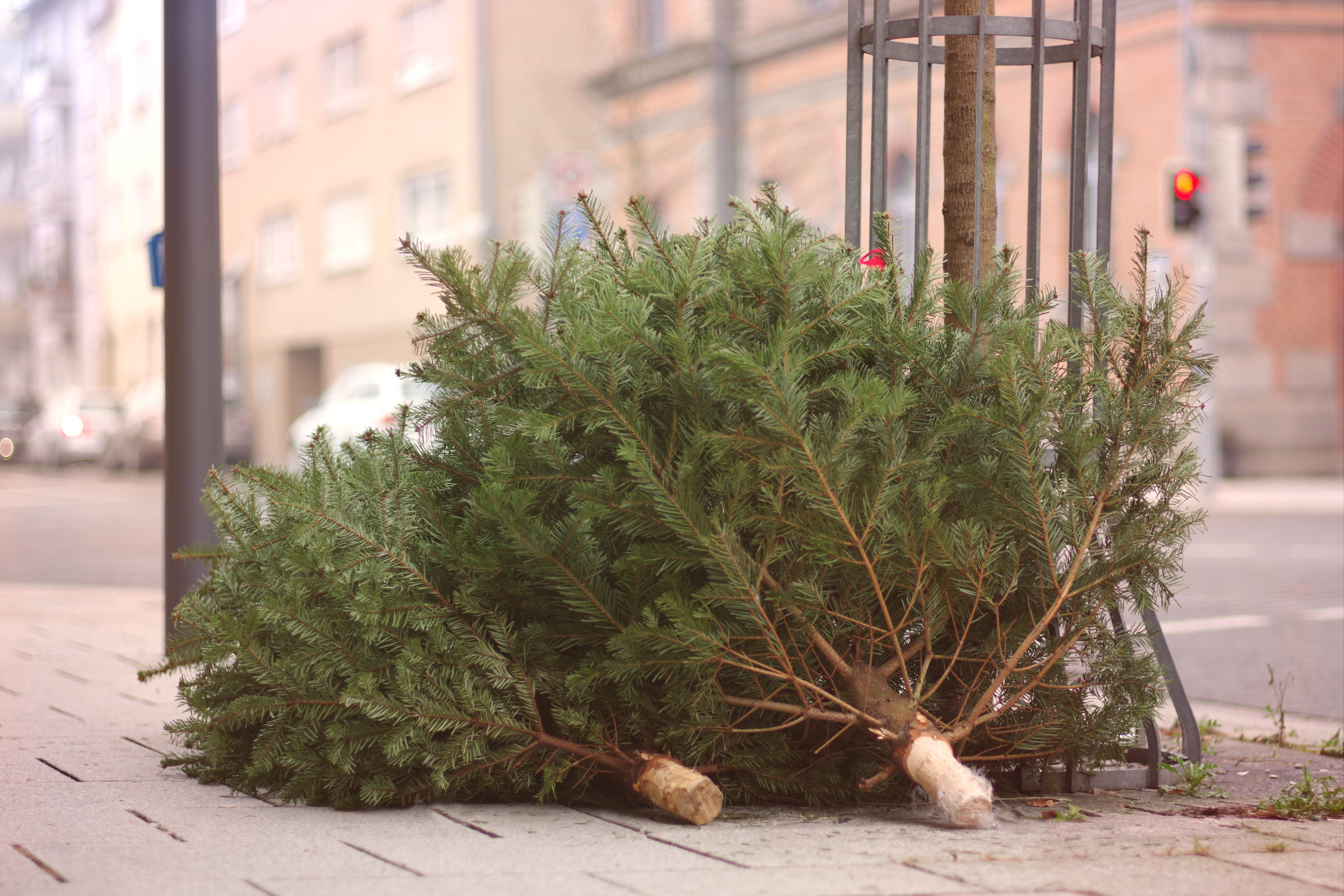 Britain Is Basically A Christmas Tree Graveyard And It's The Saddest
