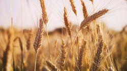Importations de blé: l'Algérie refoule la cargaison