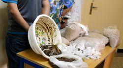 Deux hommes arrêtés à Tanger pour trafic de cannabis dans un magasin de