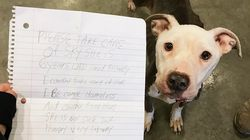 Shelter Takes In Dog Found With Heartbreaking Note Saying Owner Couldn't Feed