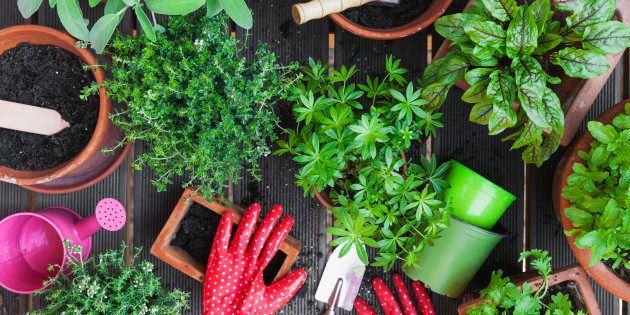 Além de os condimentos serem 100% naturais, sem agrotóxicos ou pesticidas, o sabor e o aroma dos temperos...