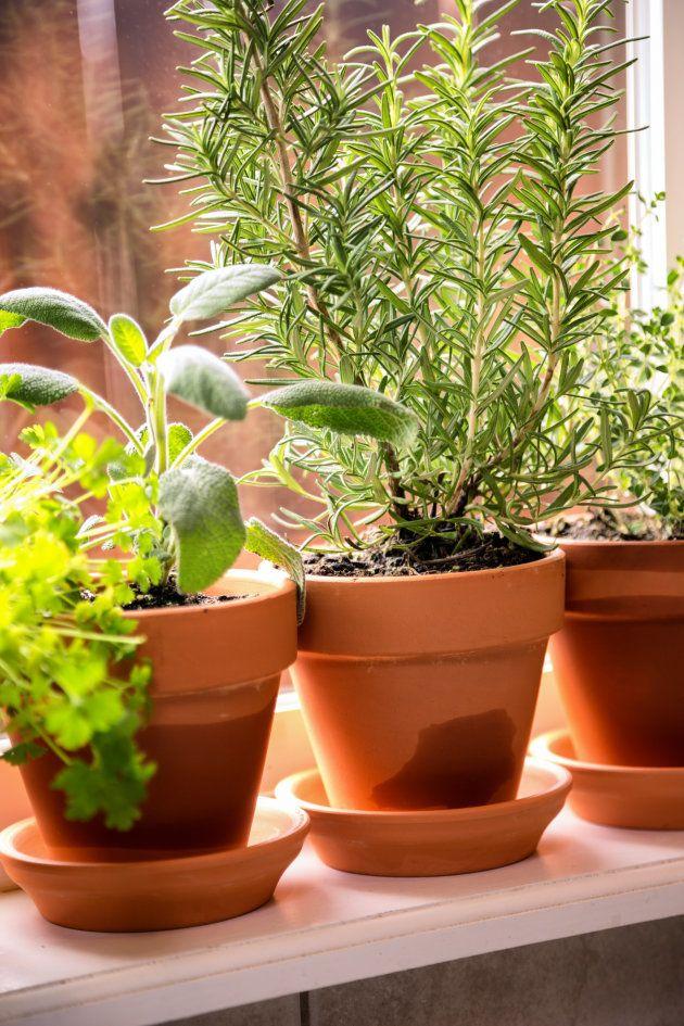 Horta doméstica: Como cultivar os próprios temperos em