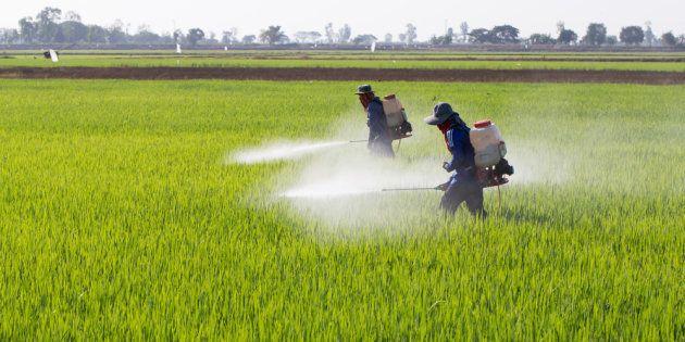 O greenwashing (em português,