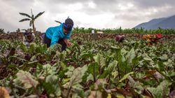 9 em cada 10 pessoas acreditam que produção de alimentos não impacta o meio