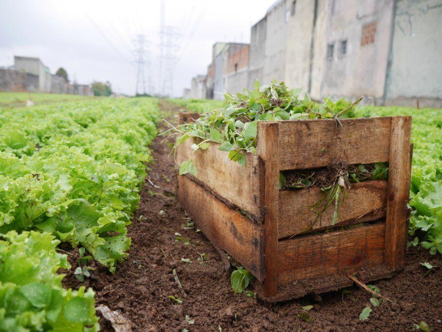 Horta de alfaces da Cidades sem Fome.
