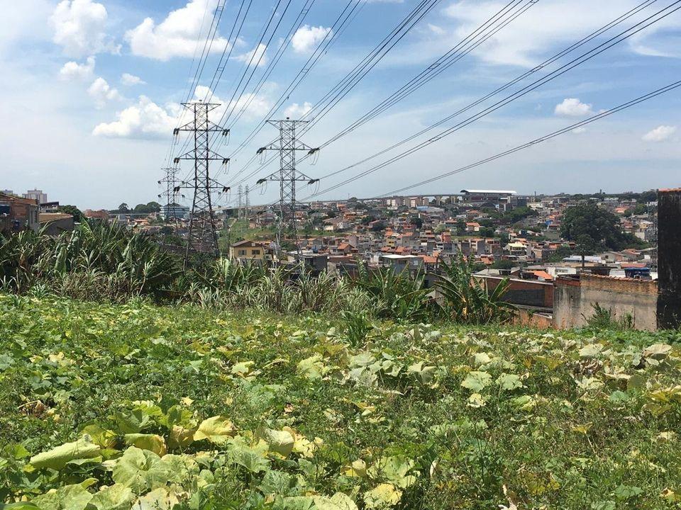 Horta da ONG Cidades sem Fome em São