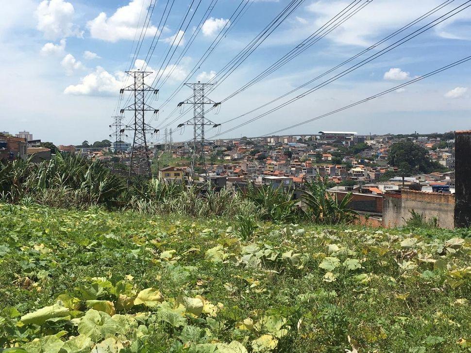 Horta da ONG Cidades sem Fome em São Paulo.