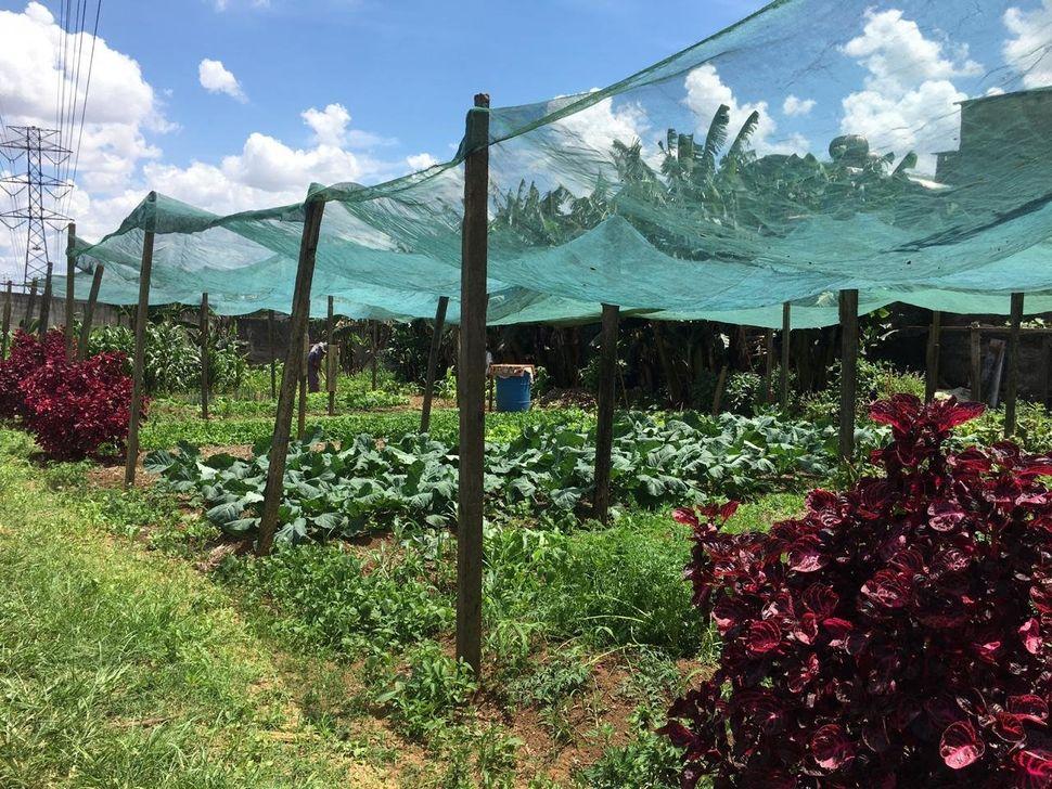 Hortas urbanas e coletivas que fazem parte da ONG Cidades sem Fome.