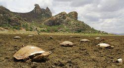 Um açude no Ceará está se transformando em um cemitério de