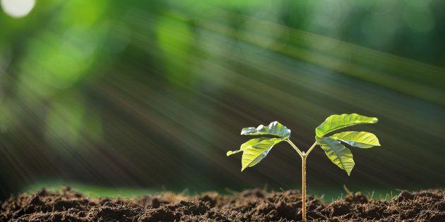 Como plantar árvores vira um grande