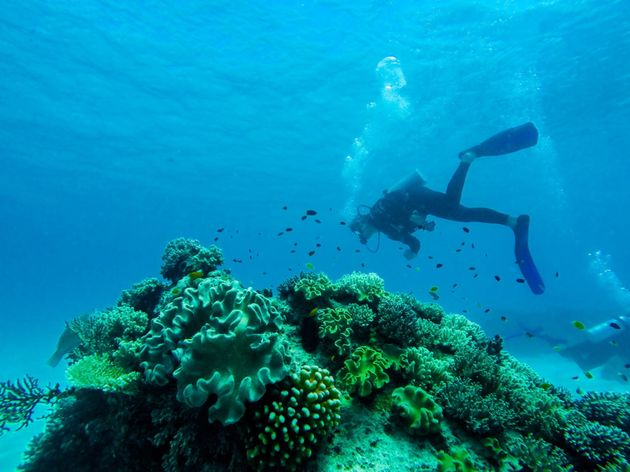 Mergulhar era uma atividade que nem sempre