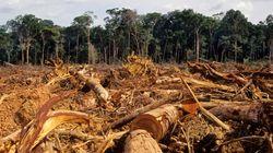 Por que nós precisamos do Cadastro Ambiental