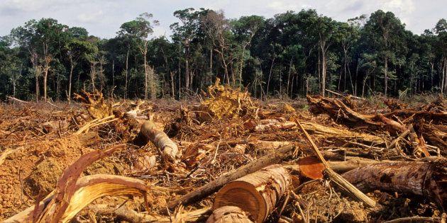 Cadastro Ambiental Rural trará transparência a dados de desmatamento no