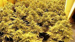 Conheça o Museu da Cannabis Montevidéu: Um oásis para além da