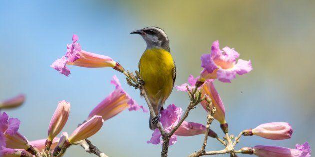 O Brasil é o segundo país do mundo em espécies de aves: são 1911