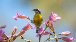 Por que a observação de aves é importante para a conservação de