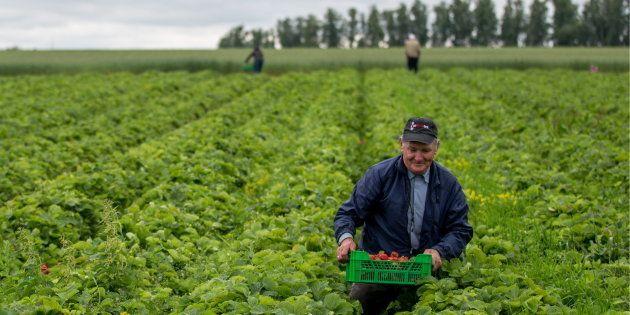 O Brasil é um dos três maiores emissores do setor agropecuário