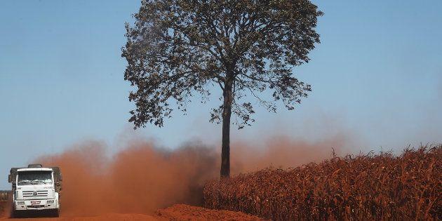 Trecho de solo desmatado na Floresta Amazônica, em