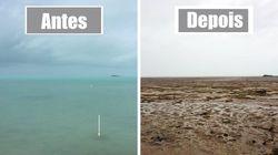 O que acontece com a vida marinha quando o mar seca por conta de um