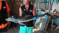 'Ser humano é a espécie mais irracional': ONG pede mais empatia após golfinho morrer em praia na