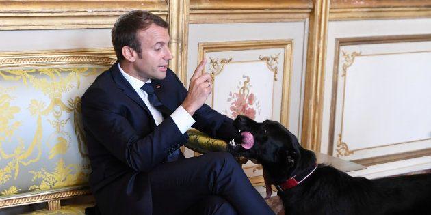 O vira-lata Nemo foi adotado por Macron em agosto deste ano e ganhou a simpatia dos