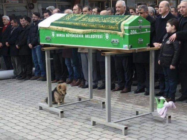 O luto deste cachorrinho pelo seu dono é de partir o