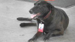 Posto de gasolina adota cachorro abandonado e o promove a funcionário do