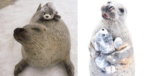 Esta foquínea está completamente apaixonada por sua nova pelúcia de