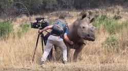 Este rinoceronte deixou um fotógrafo fazer carinho em sua barriga no meio da