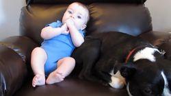 Talvez a amizade entre este bebê e seu cão tenha acabado por causa de um