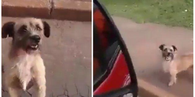 Um morador de rua de Brasília foi socorrido pelos bombeiros e o seu fiel escudeiro não o abandonou durante...