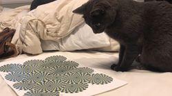Esta ilusão de ótica deixou este gatíneo meio