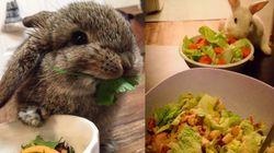 Estes 'coelíneos' comendo salada vão te ajudar a seguir a dieta mesmo na