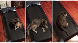 Este gatíneo é IGUAL a você tentando ser uma ~ pessoa fitness ~ em