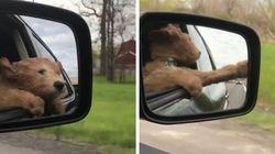 Este cachorrinho brincando com o vento é tipo você e os boletos do fim do