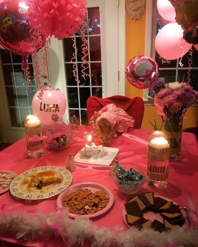 Gatinha completa 15 anos e ganha a melhor festa de debutante que você