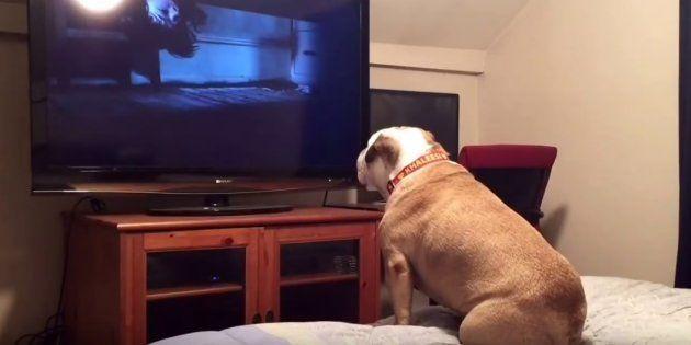 Se você tem medo de filmes de terror, esta catíorinea é a sua melhor