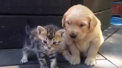 Este vídeo capta o momento exato do nascimento de uma grande amizade