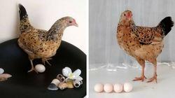 Godofreda e seus ovinhos estrelam o melhor ensaio fotográfico de maternidade do