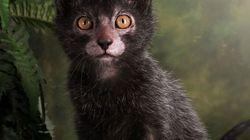 Gato ou lobisomem? Este bichíneo certamente consegue confundir a cabeça de muita