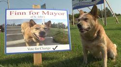 Conheça Finn, o 'cãodidato' a prefeito em uma cidade no