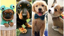 Aqui estão 14 imagens de doguinhos fofos que certamente vão deixar seu dia
